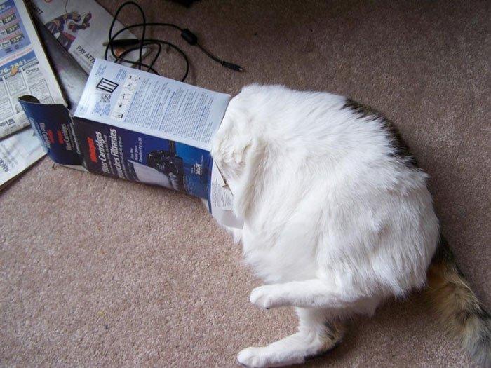 gato-problemas3