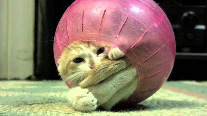gato-problemas4