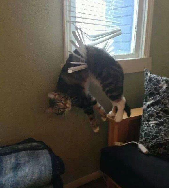 gato-problemas5