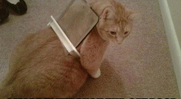 gato-problemas6