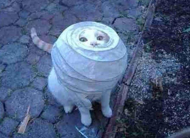 gato-problemas8