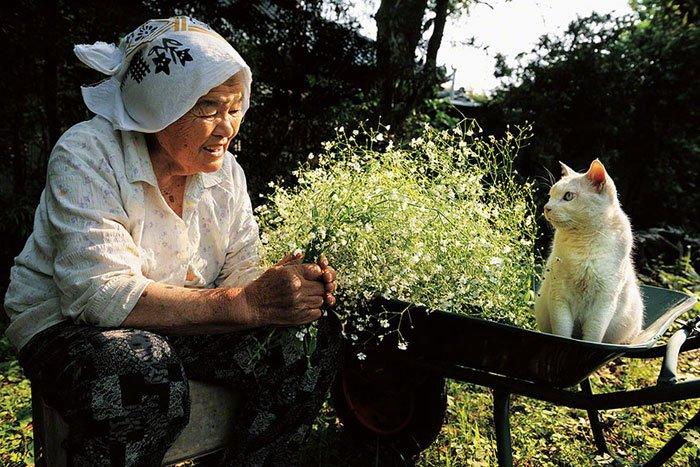 historia-abuela-gato10