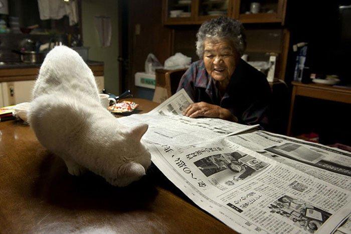 historia-abuela-gato16