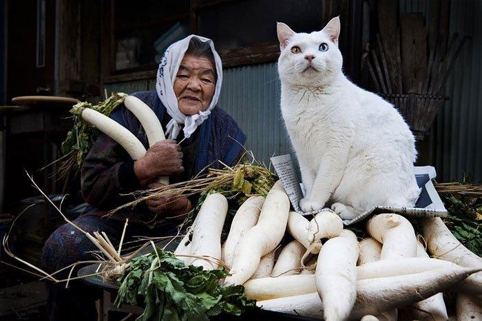 historia-abuela-gato6