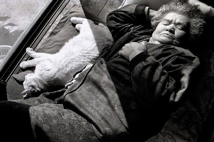 historia-abuela-gato7