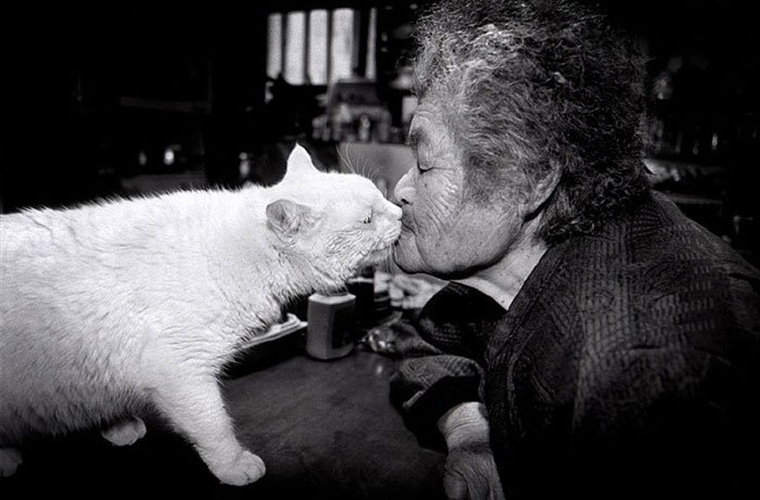historia-abuela-gato8