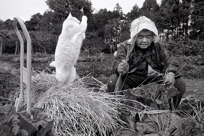 historia-abuela-gato9
