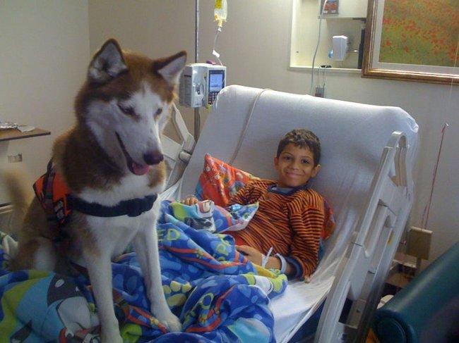 perro-terapia17