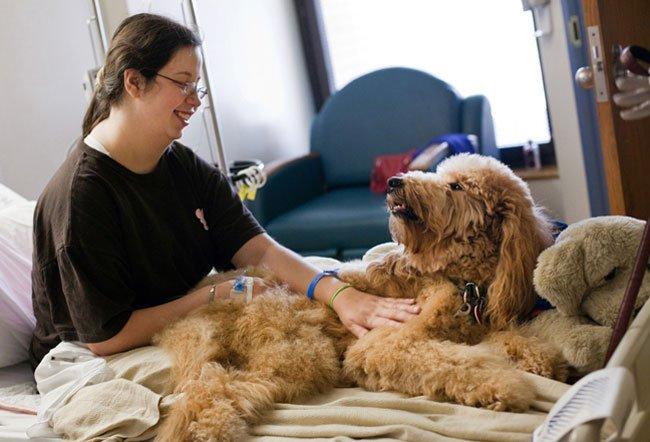 perro-terapia18
