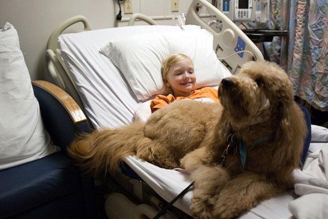 perro-terapia19