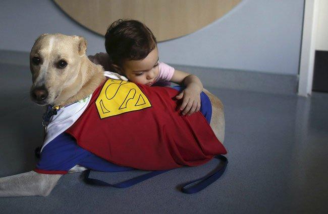 perro-terapia2