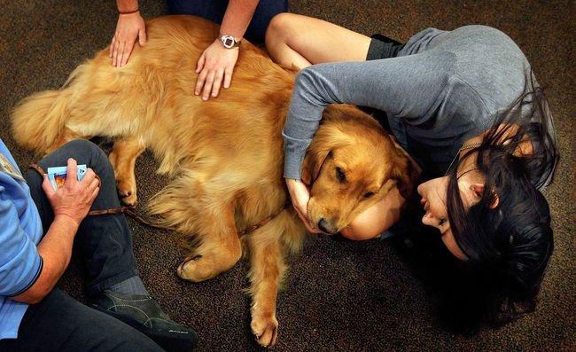 perro-terapia6
