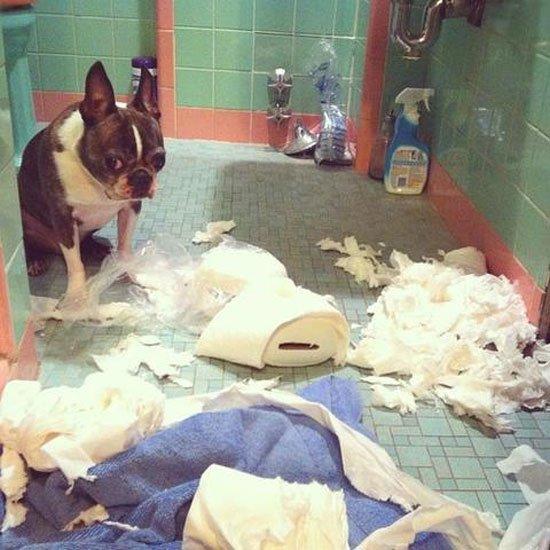 perros-culpables1