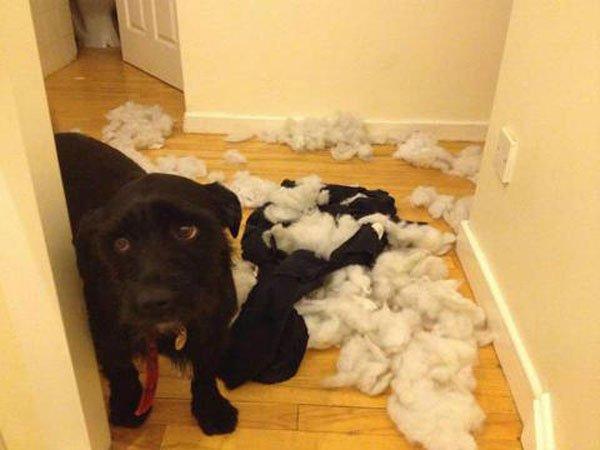 perros-culpables11