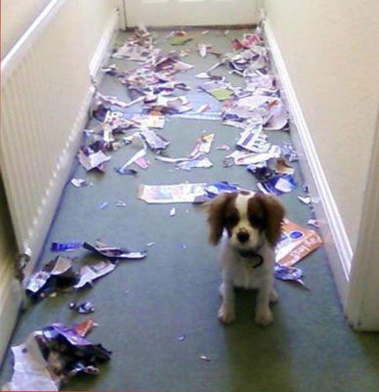 perros-culpables14