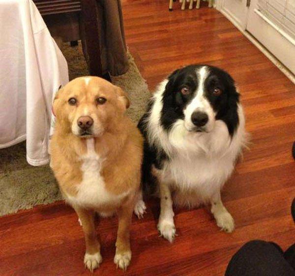 perros-culpables17
