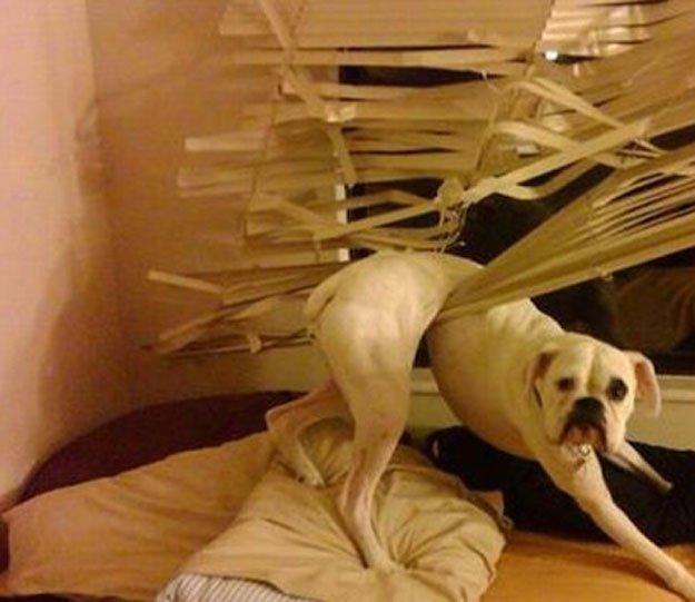 perros-culpables22