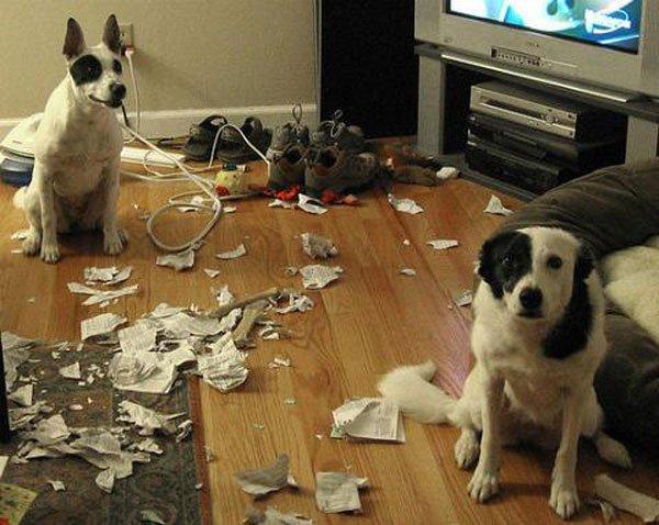 perros-culpables5