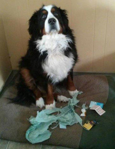 perros-culpables6
