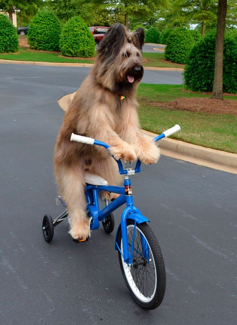 perros-independientes10