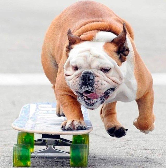 perros-independientes11