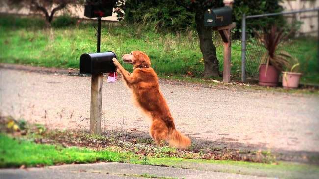perros-independientes17