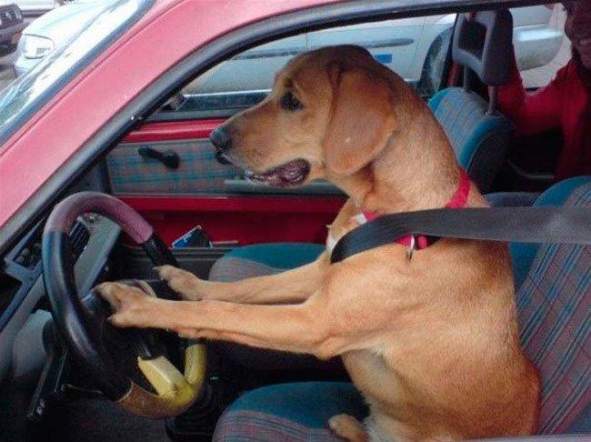 perros-independientes2