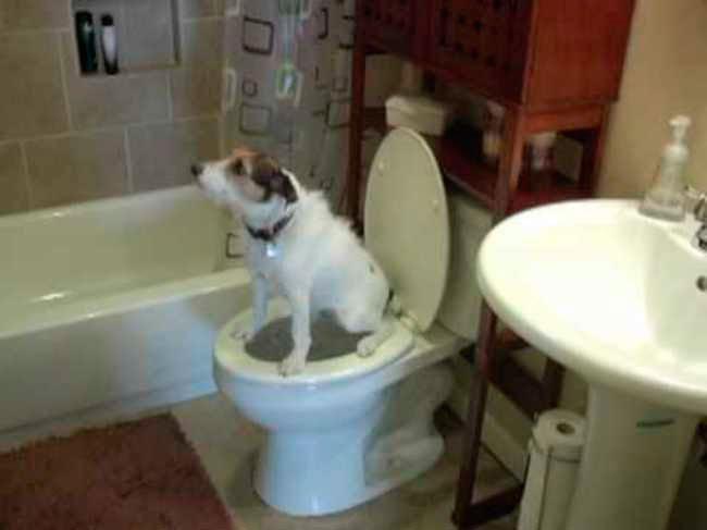 perros-independientes5