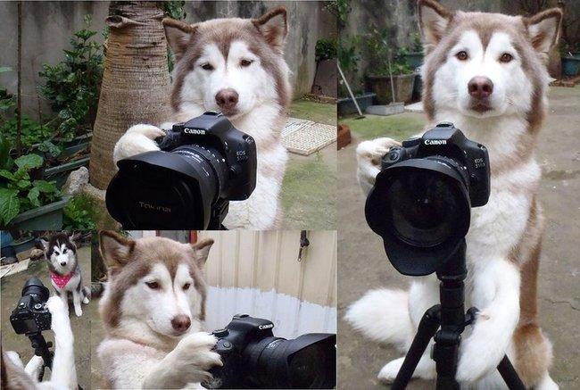 perros-independientes6