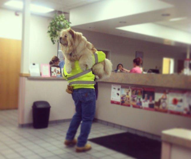 perros-veterinario10