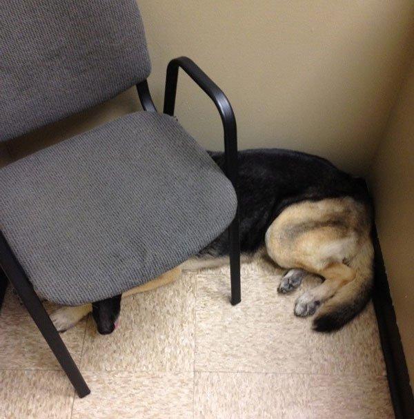 perros-veterinario11