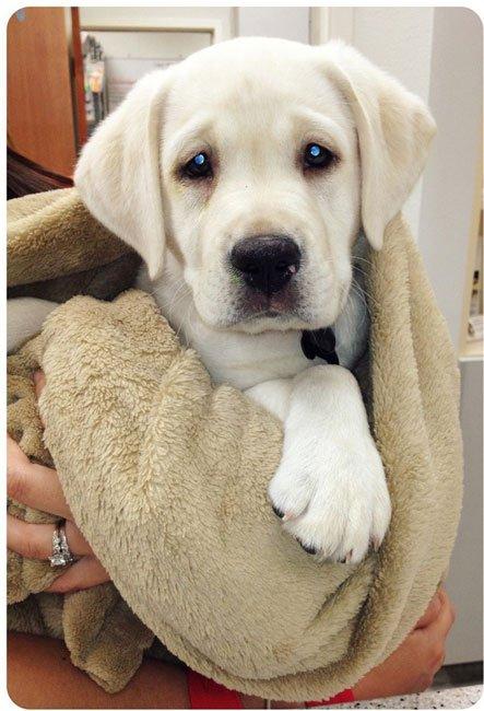 perros-veterinario4