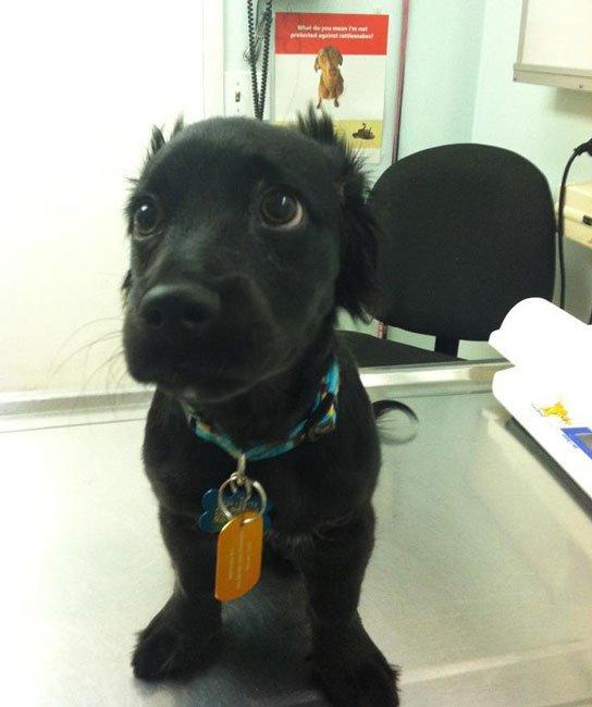 perros-veterinario5