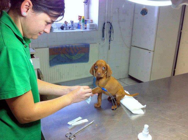 perros-veterinario6