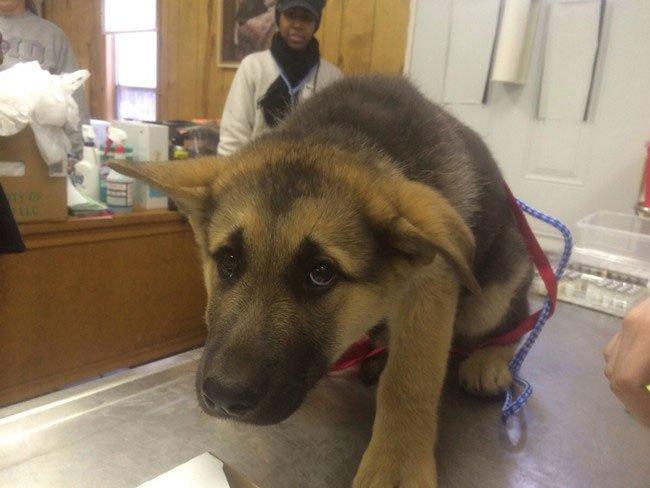 perros-veterinario8