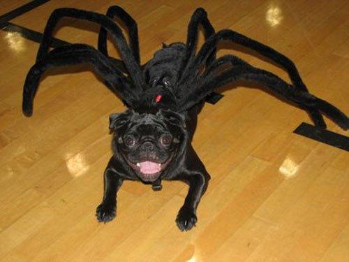 pugs-hallowen11