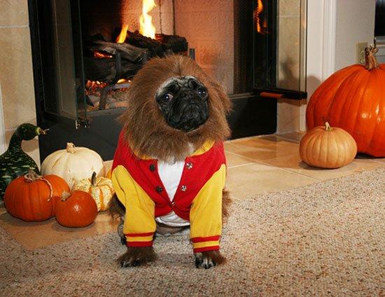 pugs-hallowen14