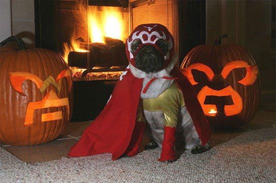 pugs-hallowen2