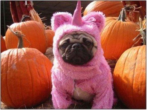 pugs-hallowen6