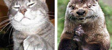 20 Animales que están tramando algo muy secreto y malévolo