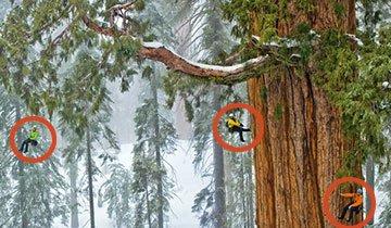 ¿Sabes cuántas fotos se necesitaron para captar el árbol más grande del mundo?