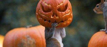 """Esta pequeña ardilla hizo la cosa más """"Halloweeniana"""" que he visto nunca."""