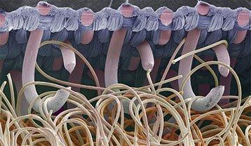 Cosas normales que con un microscopio se ven un poco… ¿horribles?