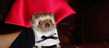 25 Disfraces terroríficamente hermosos para animales domésticos. Morirás de ternura.