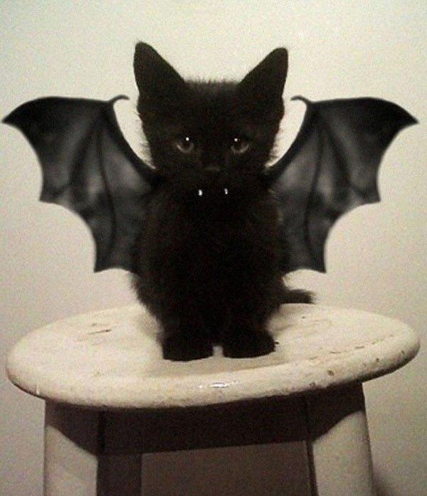 disfraces-halloween-mascotas1