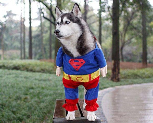 disfraces-halloween-mascotas10