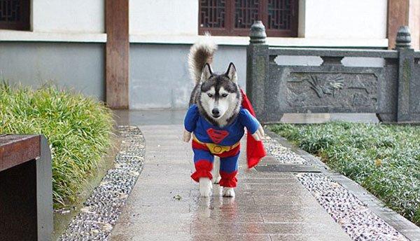 disfraces-halloween-mascotas11