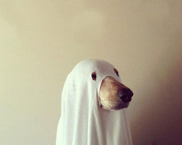 disfraces-halloween-mascotas13