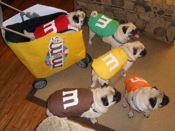 disfraces-halloween-mascotas14