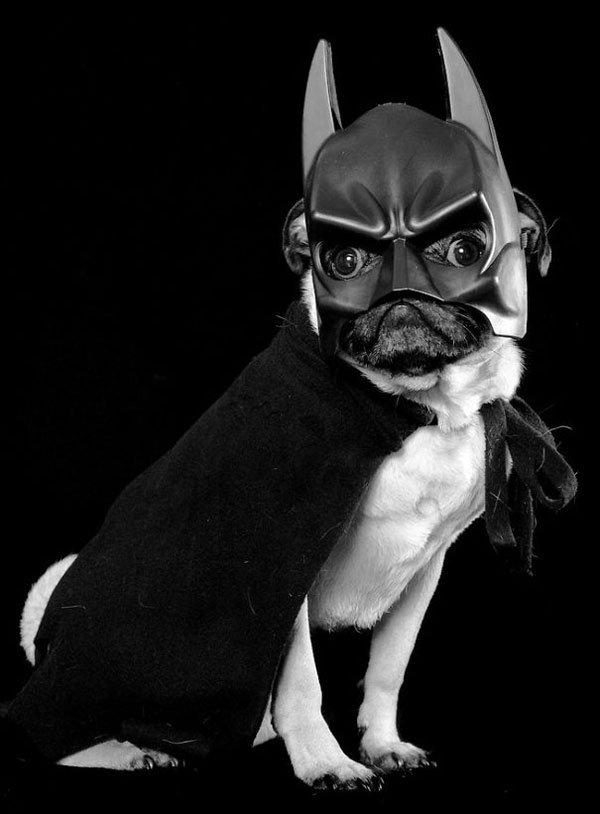 disfraces-halloween-mascotas15